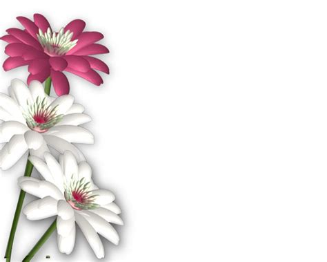 design background flower flowers png photoshop png frames wallpapers designs