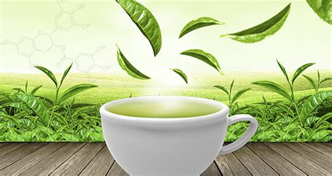 Herbal Cancer Fit 3 anti cancer health benefits of green tea the
