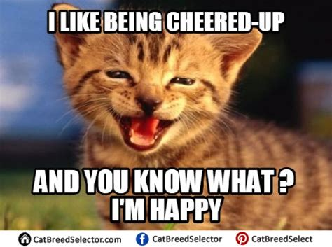 Cheer Up Cat Meme - cat memes cat breed selector