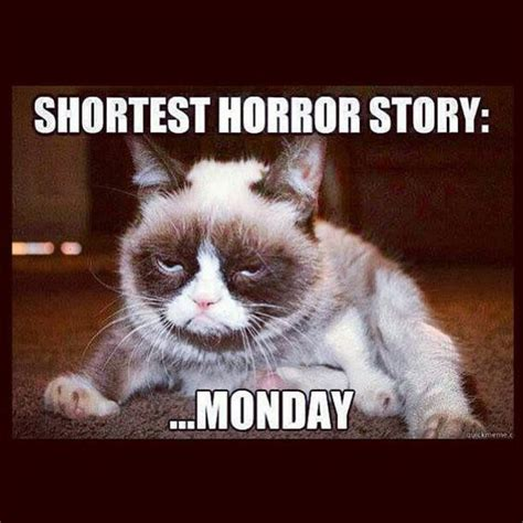 Monday Meme Images - 17 best ideas about monday memes on pinterest monday