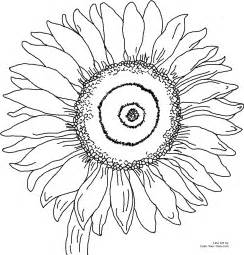 sunflower coloring page sunflower coloring pages 171 coloring
