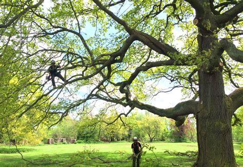 trees oxfordshire specialist tree surgeons northtonshire oxfordshire