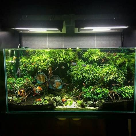 Aquascaping Planted Tank by 17 Best Images About Aquascape On Cichlids