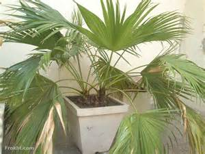 indoor house plants for sale 7 indoor plants home decor for sale in faisalabad 24903