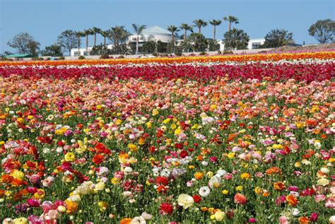 Flower Garden Carlsbad Carlsbad Flower Garden Carlsbad Flower Gardens Flickr Photo Carlsbad Flower Gardens