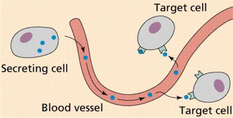 v protein djelovanje prote 237 nas funciones