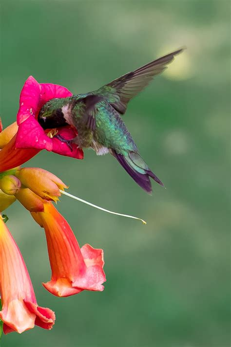 7 amazing facts about incredible hummingbirds brisk post