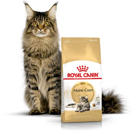 Royal Canin Maine Coon 10 Kg 424 by Royal Canin Maine Coon 31 10kg Internetowy Sklep