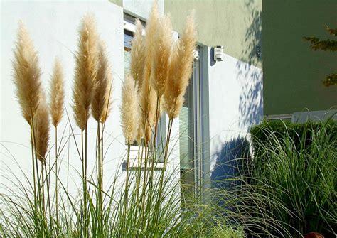 winterharte gräser garten pasgras pflege 220 berwinterung r 252 ckschnitt