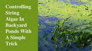 Garden Insect Pests - control string algae in the backyard pond