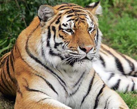 contoh contoh hewan karnivora