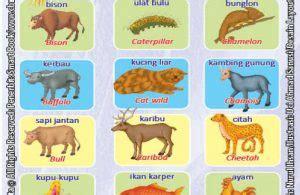 Mengenal Lingkungan Dan Hewan 3 Bahasa Seri Kamus Bergambar kamus visual binatang dua bahasa indonesia inggris 6 ebook anak