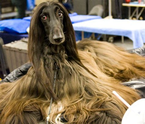 7 Cool Breeds Of Dogs by Top 10 Cool Breeds Care Community
