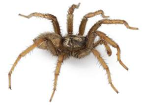 Spiders In Spiders Could Theoretically Eat Every Human On Earth In