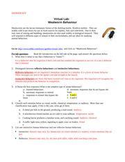 mealworm behavior worksheet 1 virtual lab mealworm