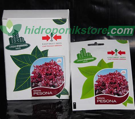 Daun Sirih Merah Kering Kemasan 100 Gram selada merah pesona urbanfarming 100 biji