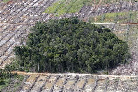 gambar kerusakan hutan foto kerusakan hutan alamendah
