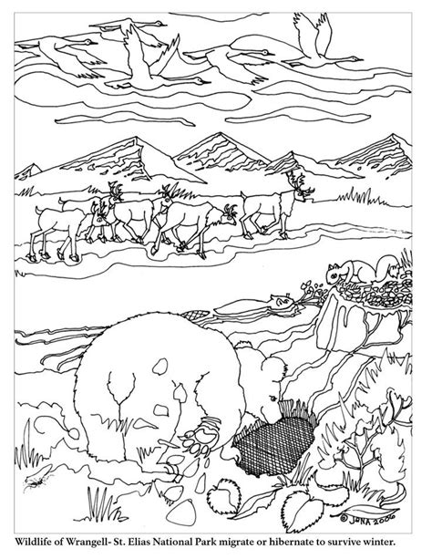 coloring pages of animals that hibernate hibernation coloring pages az coloring pages