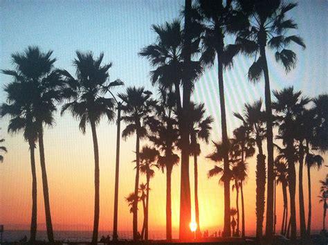 california palm trees travel california