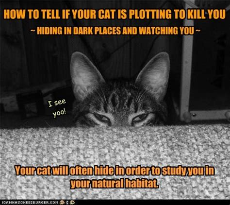 how to tell if your cat is plotting to kill you the oatmeal pin by kellams on things for my wall