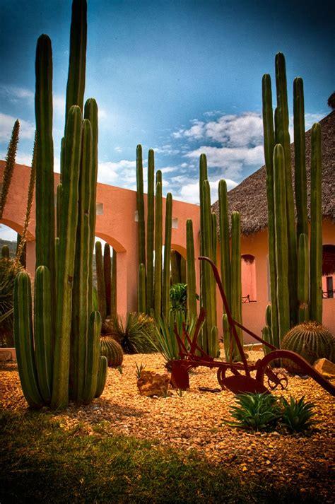 jardin desertico  jose manuel cajigal  px desert