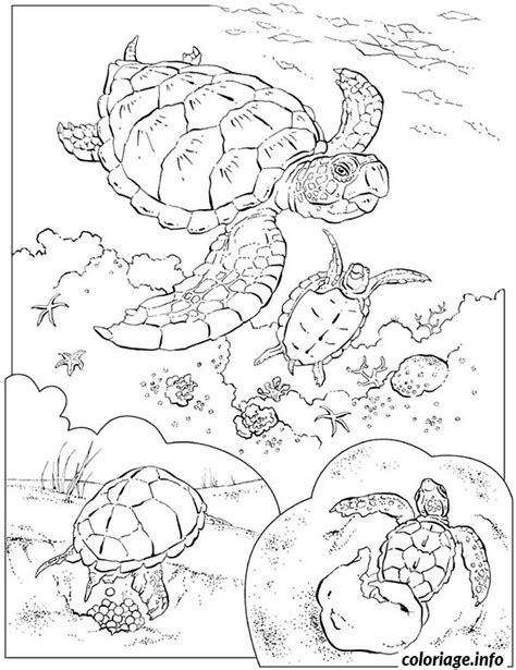 Coloriage Tortues Marines Dessin