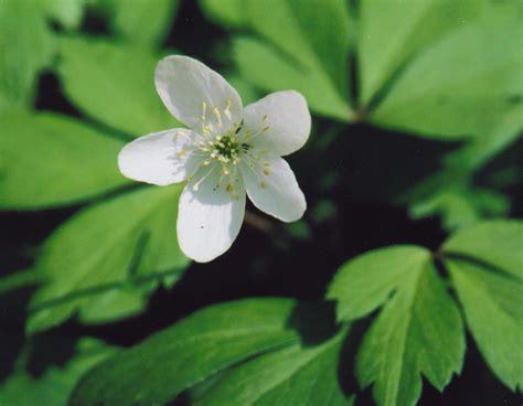 15 04 St Flower Bee White found in the fells september