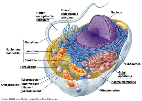 a protein that is bound to a carbohydrate is called a biology 1406 biology 1406 with holman at