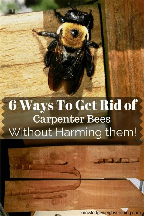 how to get rid of bees in backyard 25 best ideas about carpenter bee on pinterest vintage bee tattoo free use images