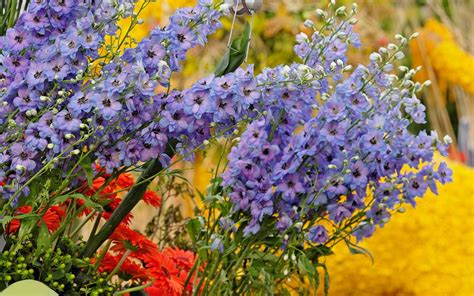 wallpaper flower colourful colorful flowers wallpaper 875
