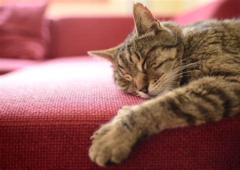Sleep Cats 4 cat sleeping habits explained