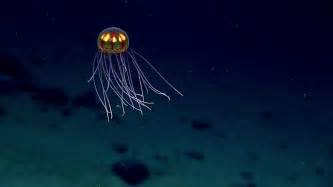 climate change  warmer oceans   deep sea