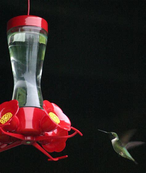 make your garden a hummingbird haven the garden glove