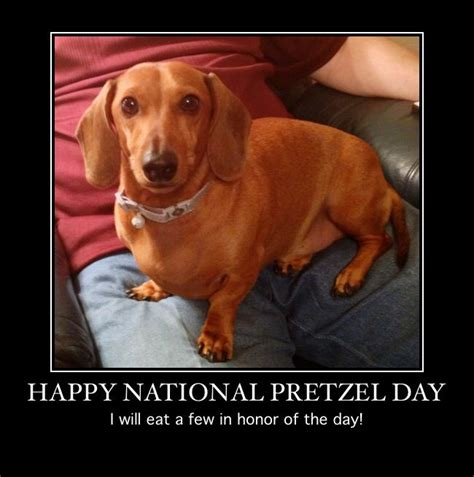 17 best images about pretzel my precious dachshund on
