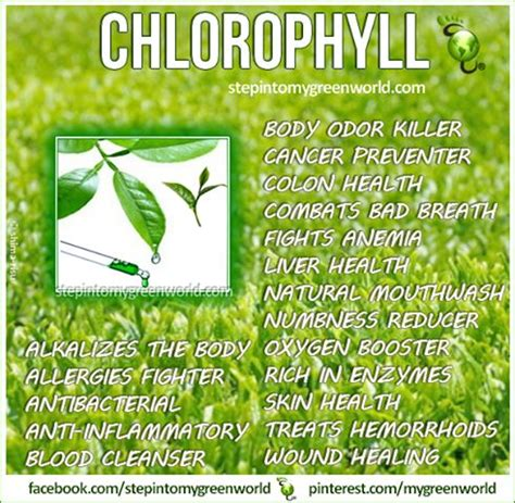 Chlorophyll Detox Benefits by 100 Best Images About Apothecary On