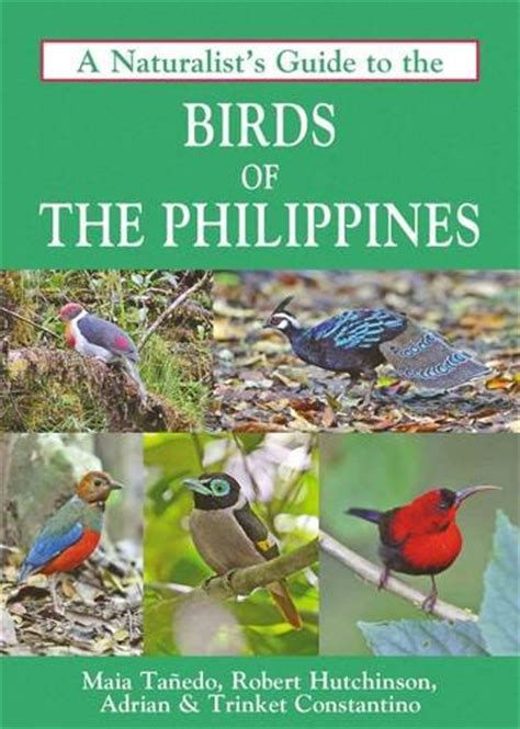 Photographic Guide To The Birds Of Javan Montane Forest Gn Halimun Par birdwatch ph birding activity