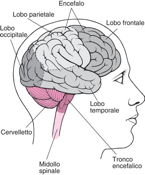 msd italia sede disfunzione cerebrale in base alla sede disturbi di