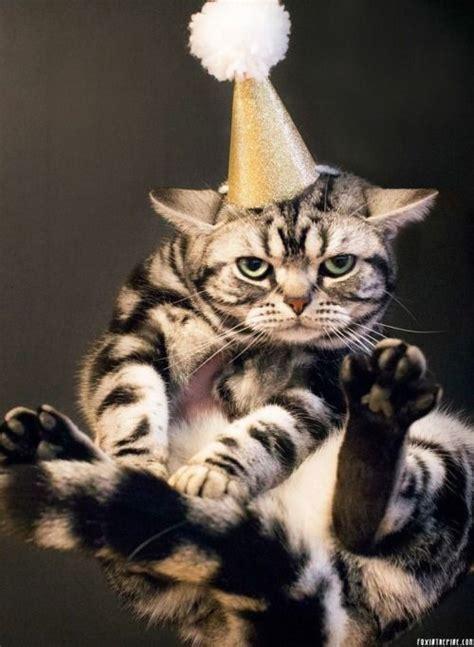 new year animal birthday 190 best happy birthday images on happy