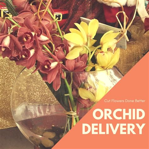 orchid delivery what you should know before ordering your orchid delivery