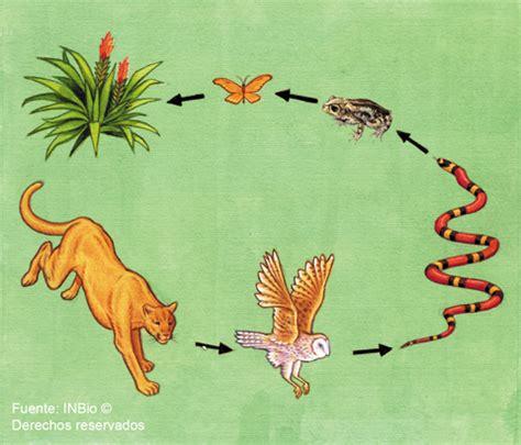 cadena trofica hormigas ecolog 204 a marzo 2012