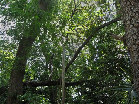 Trees With Canopy Tree Canopy Clippix Etc Educational Photos For Students