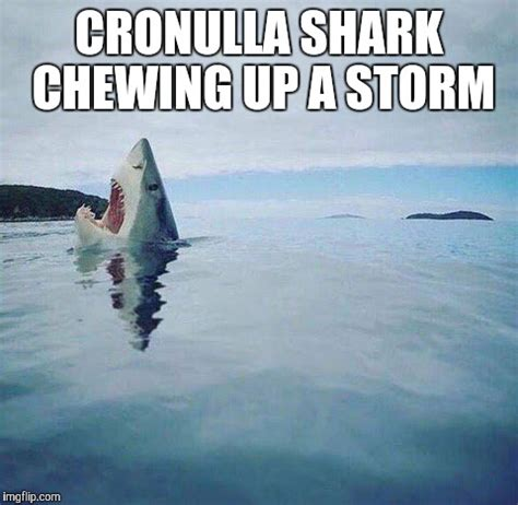 Cronulla Sharks Memes - shark head out of water imgflip