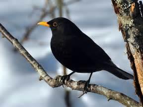 inspirational storytellers it s a blackbird