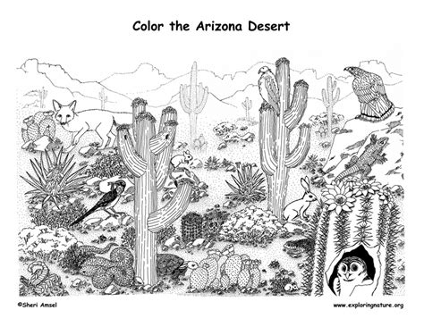 desert coloring pages for kids az coloring pages arizona habitats mammals birds amphibians reptiles