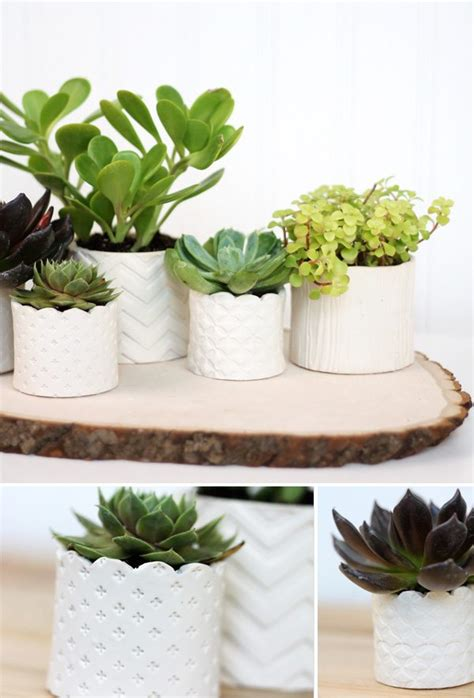 diy succulent projects diy sted clay succulent pots damask