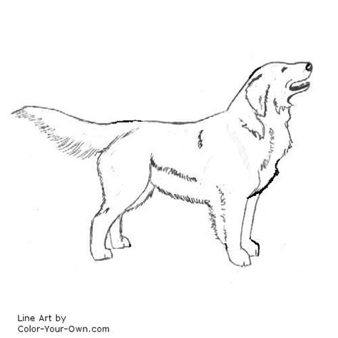 coloring pages of golden retriever puppies tweet coloring pages blog newest additions main coloring