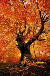 best 25 fall trees ideas on pinterest fall trees