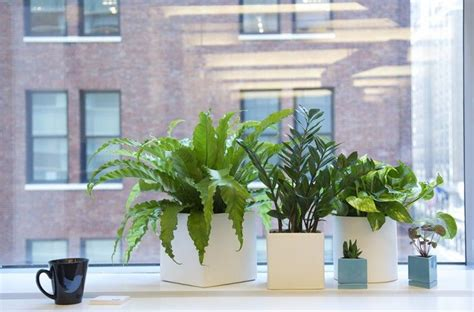plants for office 12 ways that plants can improve your life kirn radio iran