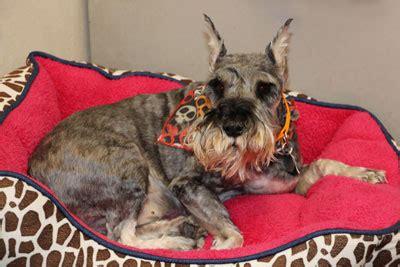 shore animal league puppy surviving pet care program shore animal league america