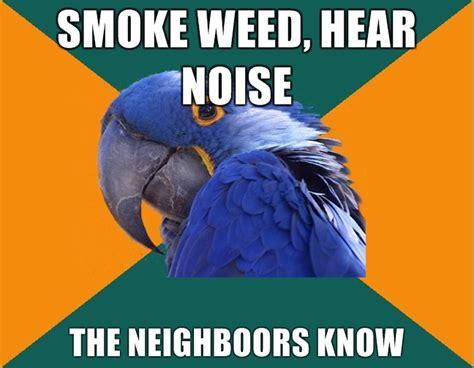 Paranoid Parrot Meme - paranoid parrot smoke weed meme